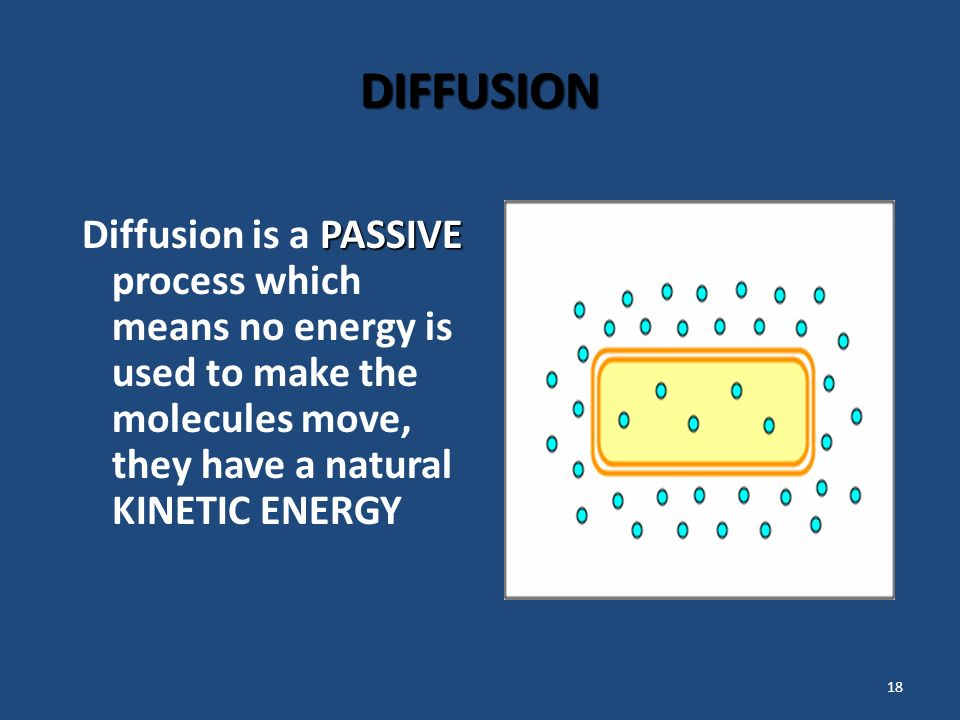 18 DIFFUSION PASSIVE Diffusion is a PASSIVE process which means no energy is used to make the molecules move, they have a natural KINETIC ENERGY