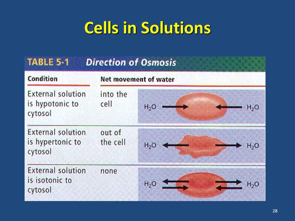 28 Cells in Solutions