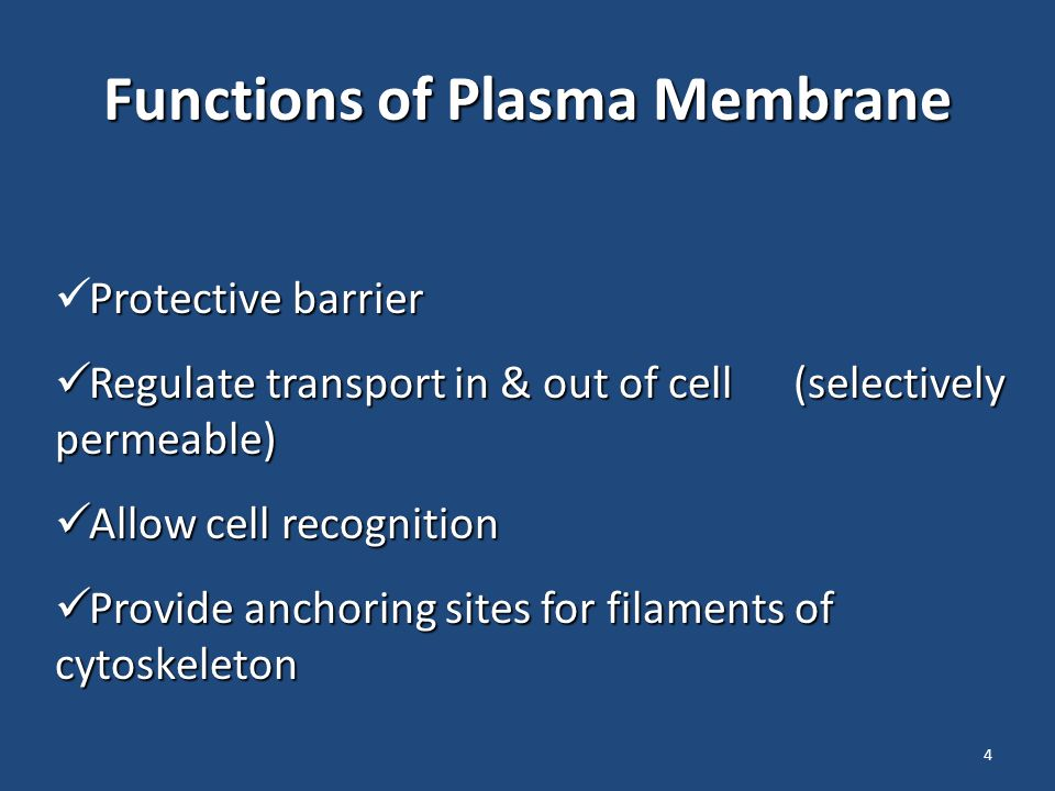 4 Functions of Plasma Membrane Protective barrier Regulate transport in & out of cell (selectively permeable) Allow cell recognition Provide anchoring sites for filaments of cytoskeleton