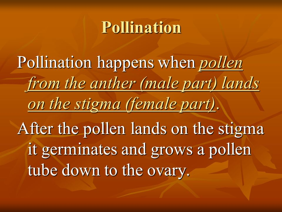 Pollination Pollination happens when pollen from the anther (male part) lands on the stigma (female part).