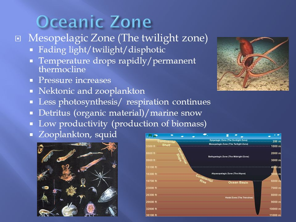  Mesopelagic Zone (The twilight zone)  Fading light/twilight/disphotic  Temperature drops rapidly/permanent thermocline  Pressure increases  Nekt