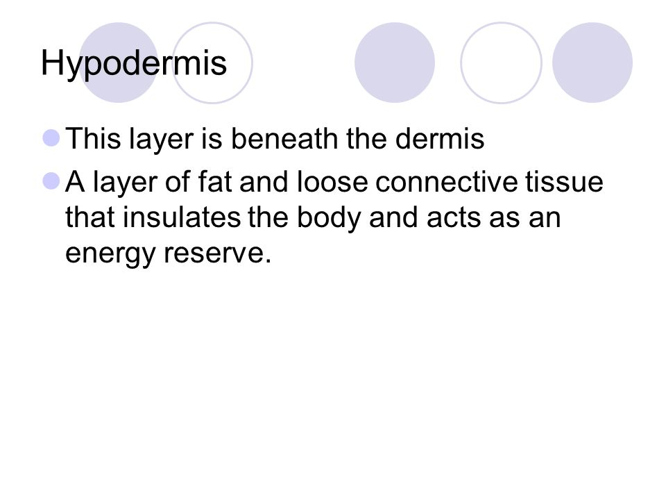 Hypodermis This layer is beneath the dermis A layer of fat and loose connective tissue that insulates the body and acts as an energy reserve.