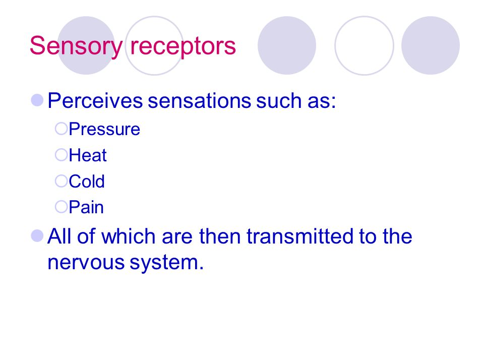 Sensory receptors Perceives sensations such as:  Pressure  Heat  Cold  Pain All of which are then transmitted to the nervous system.