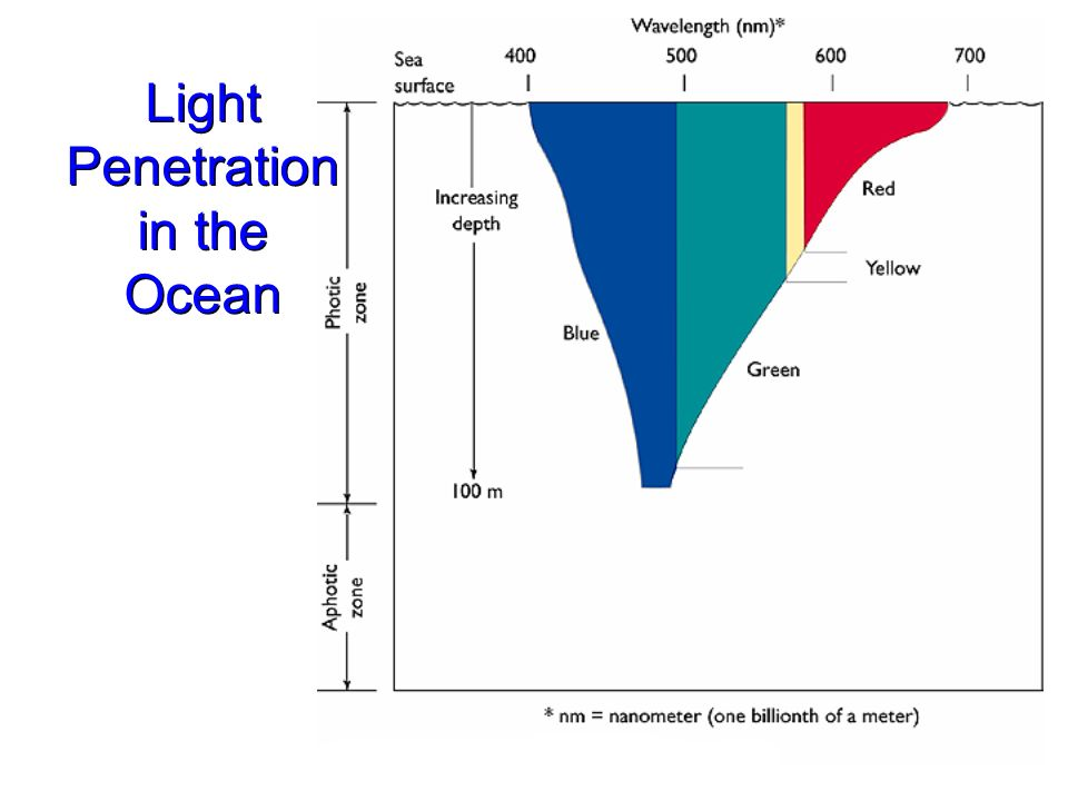 Light penetration in the ocean
