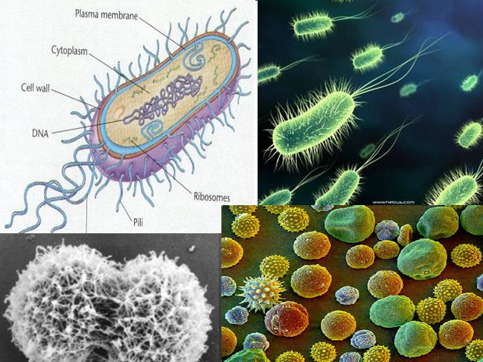  Defined: microorganisms that cause disease Viruses: turn cells into virus making factories Bacteria: prokaryotes that can release toxic chemicals