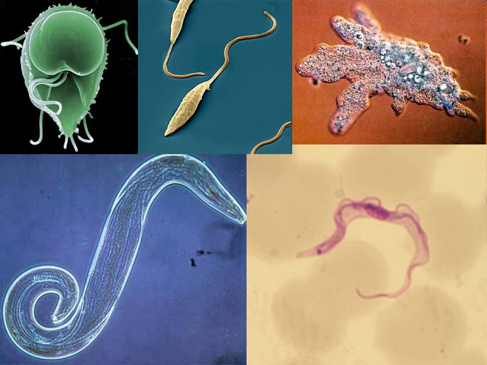 Pathogens  Defined: microorganisms that cause disease Viruses: turn cells into virus making factories Bacteria: prokaryotes that can release toxic chemicals Fungi: pierce cells and absorb the nutrients Protozoans: single cells protista (eukaryotes)