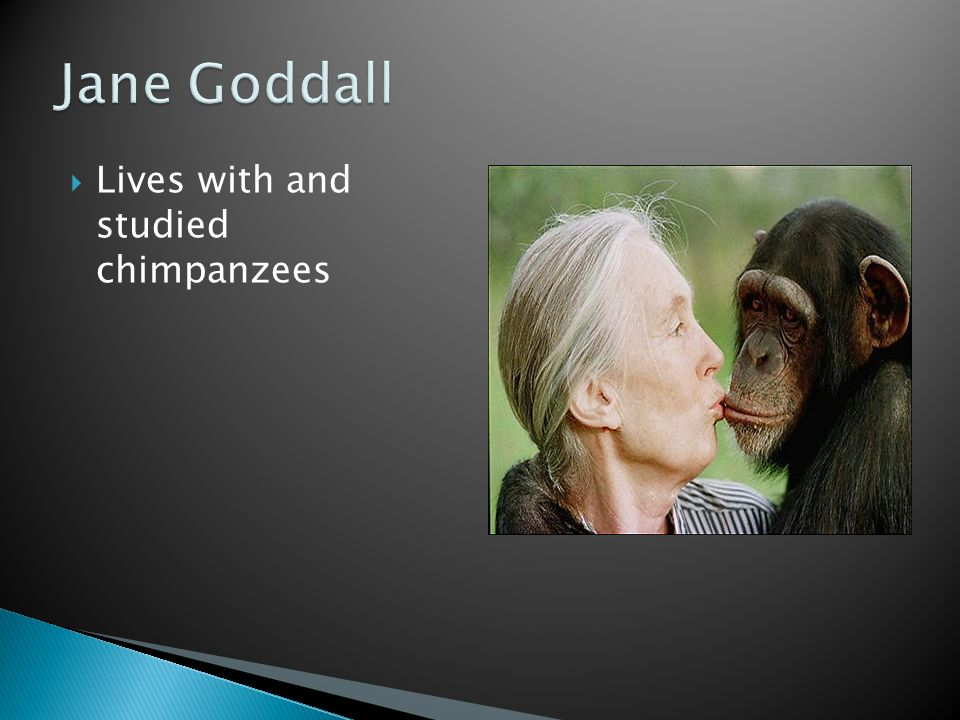  Lives with and studied chimpanzees