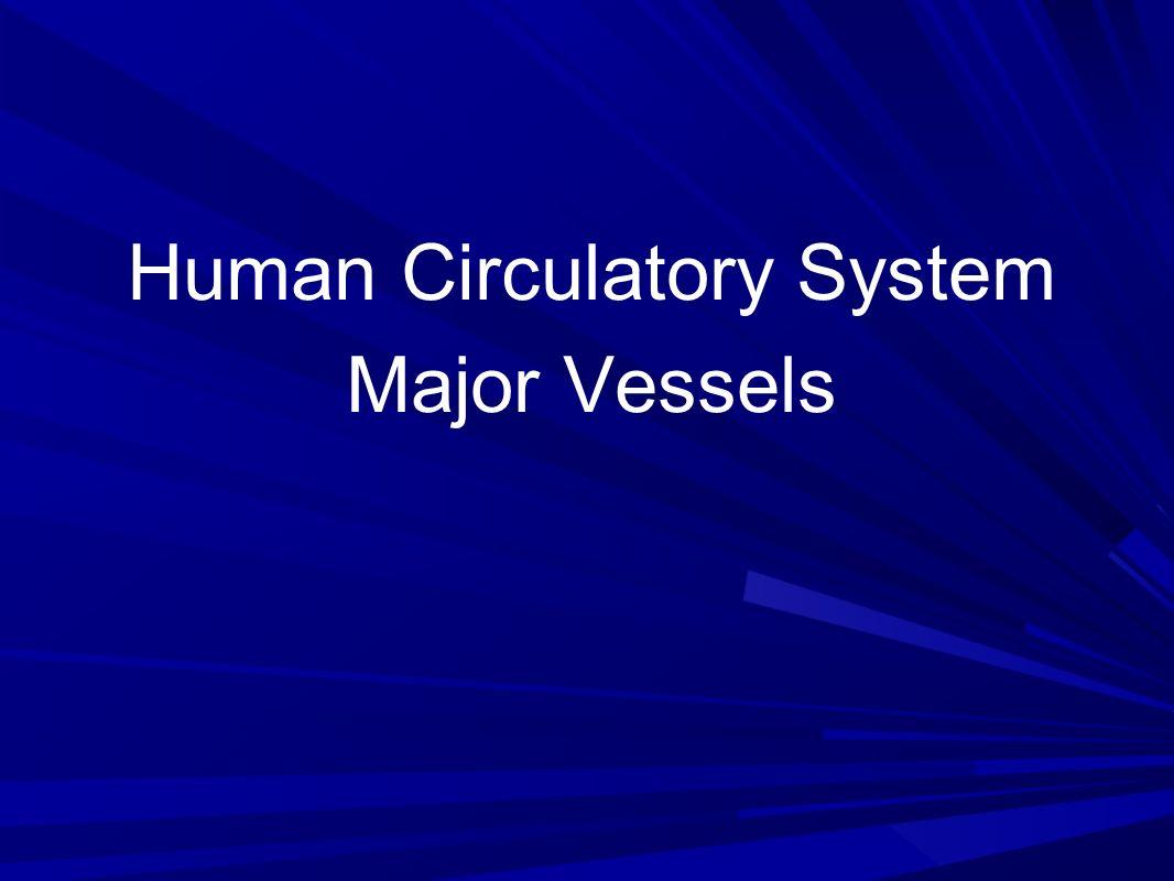 Human Circulatory System Major Vessels