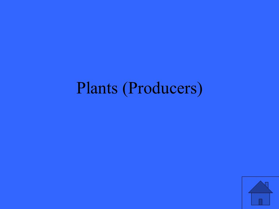 Plants (Producers)