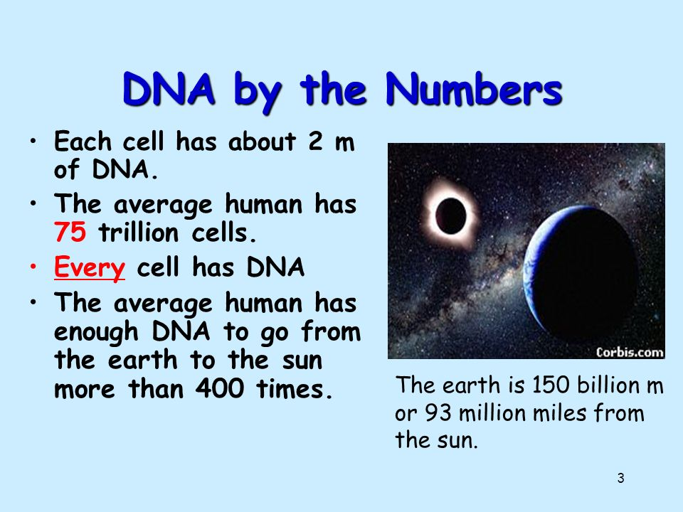 2 DNA DNA.DNA is often called the blueprint of life.