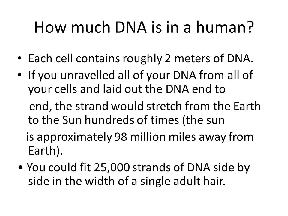 How much DNA is in a human. Each cell contains roughly 2 meters of DNA.