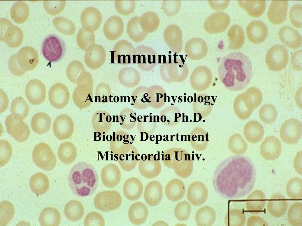 Immunity Anatomy & Physiology Tony Serino, Ph.D. Biology Department ...