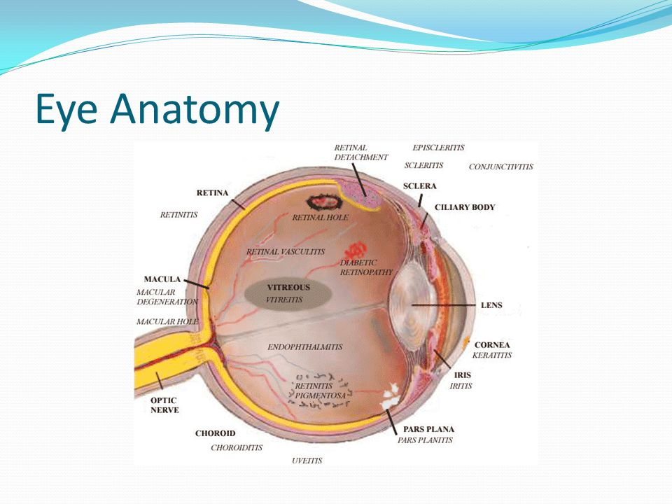 Contemporary Eye Anatomy Picture Image Anatomy Ideas Yunokifo