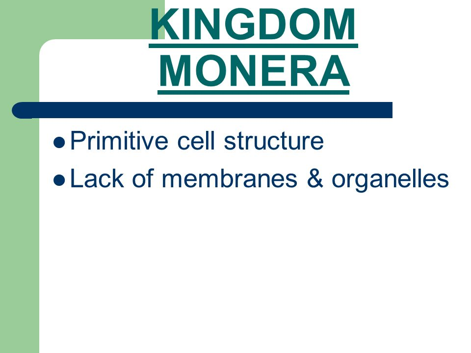 KINGDOM MONERA Primitive cell structure Lack of membranes & organelles