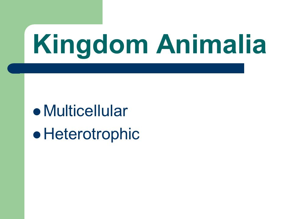 Kingdom Animalia Multicellular Heterotrophic