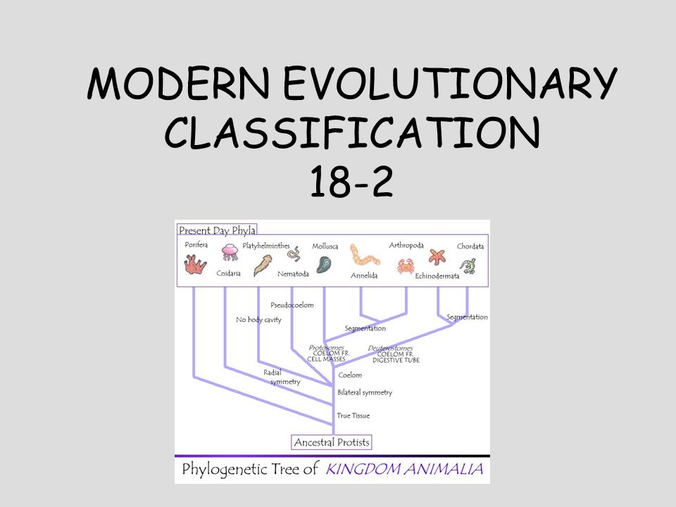 Worksheets Section 18-2 Modern Evolutionary Classification Worksheet Answers modern evolutionary classification in a way organisms determine 1 18 2