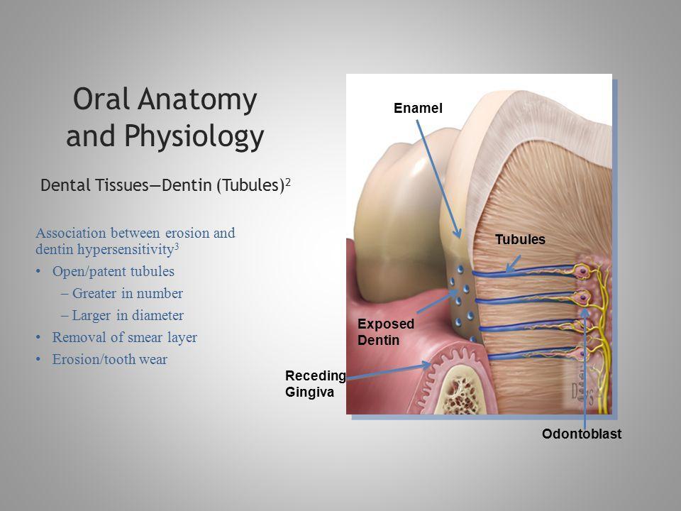 DENTAL EROSION—TOOTH WEAR Physiology, Etiology, Epidemiology ...