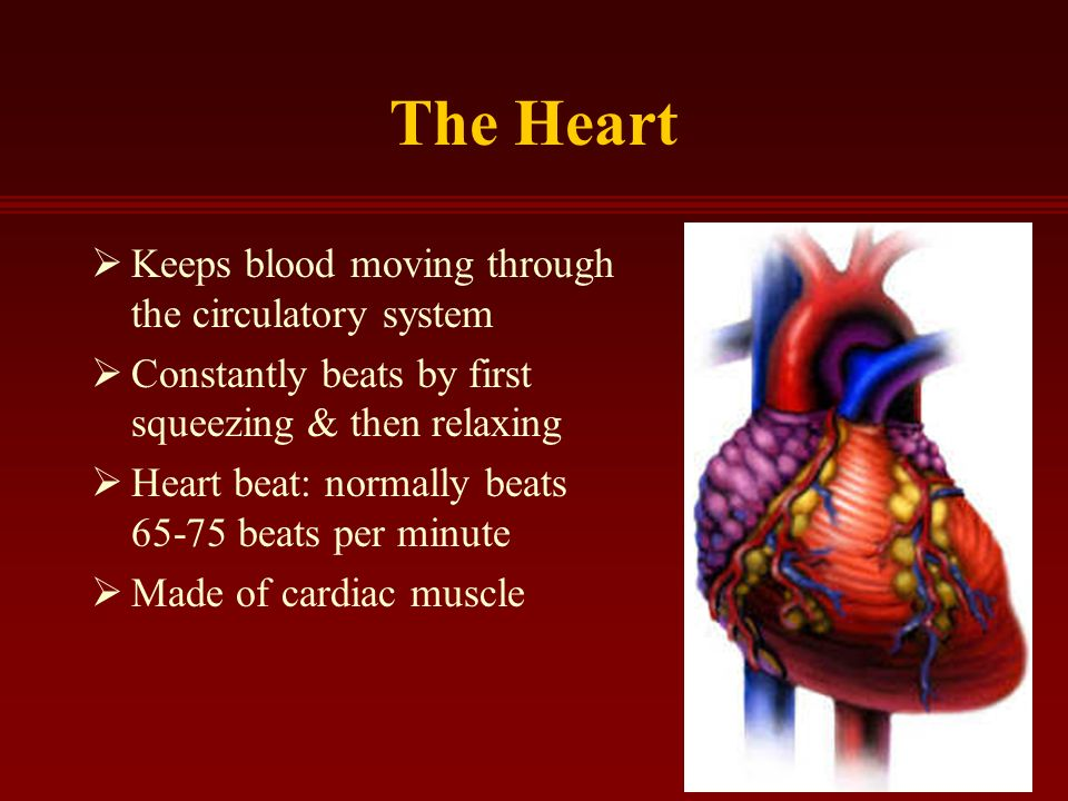 The Heart  Keeps blood moving through the circulatory system  Constantly beats by first squeezing & then relaxing  Heart beat: normally beats beats per minute  Made of cardiac muscle