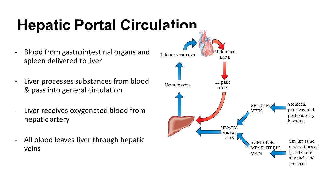 Ch 163 circulatory routes systemic circulation all vessels hepatic portal circulation blood from gastrointestinal organs and spleen delivered to liver liver processes pooptronica