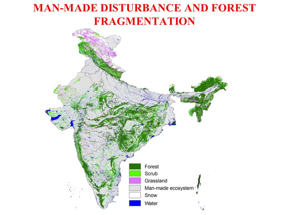 MAN-MADE DISTURBANCE AND FOREST FRAGMENTATION