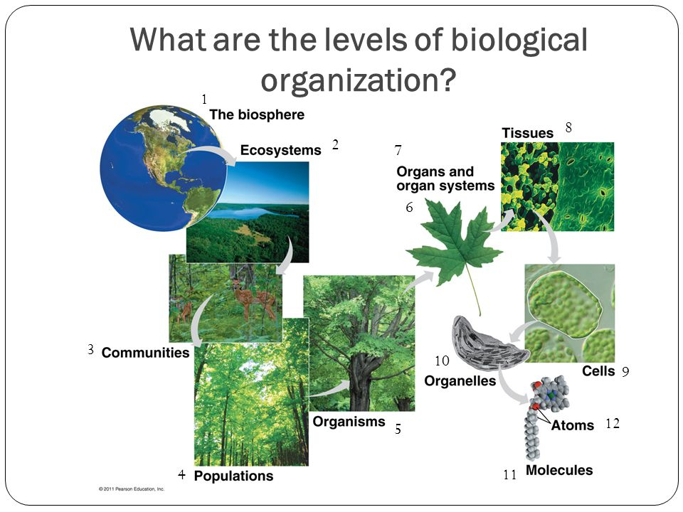 What are the levels of biological organization