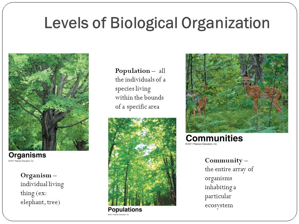 Levels of Biological Organization Organism – individual living thing (ex: elephant, tree) Population – all the individuals of a species living within the bounds of a specific area Community – the entire array of organisms inhabiting a particular ecosystem