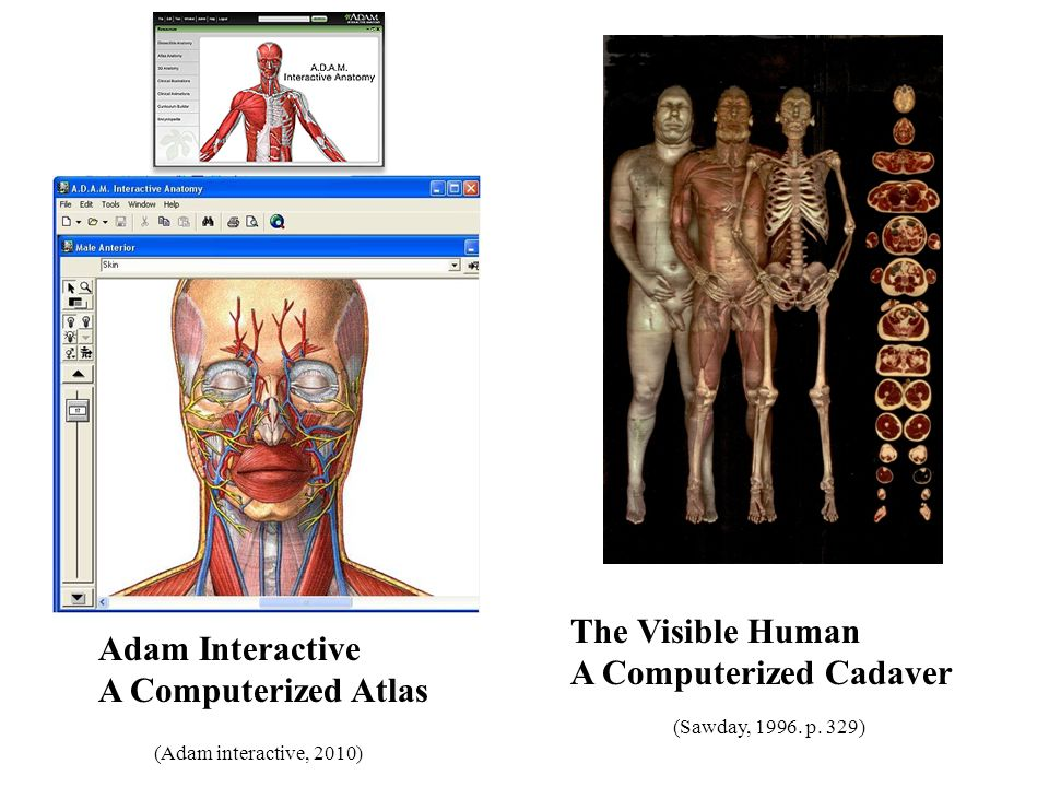 Nice Adams Interactive Anatomy Pictures - Anatomy And Physiology ...