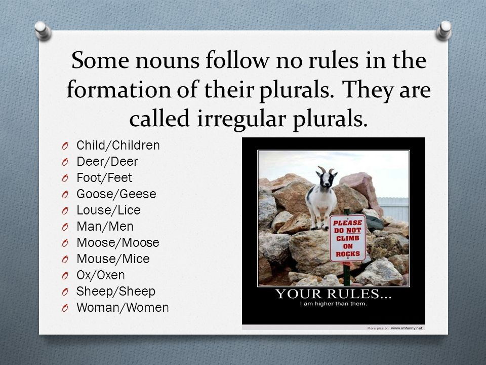 """Lesson 11 """"Life Under Ice"""". Singular & Plural Nouns  To form the ..."""