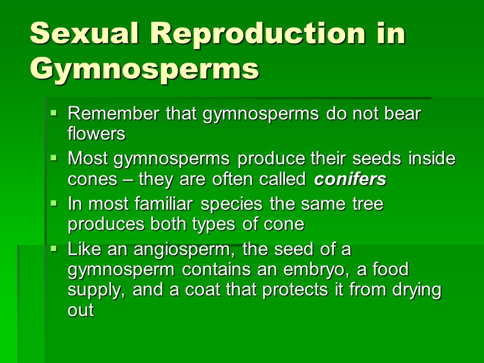 Sexual Reproduction in Gymnosperms  Remember that gymnosperms do not bear flowers  Most gymnosperms produce their seeds inside cones – they are often called conifers  In most familiar species the same tree produces both types of cone  Like an angiosperm, the seed of a gymnosperm contains an embryo, a food supply, and a coat that protects it from drying out