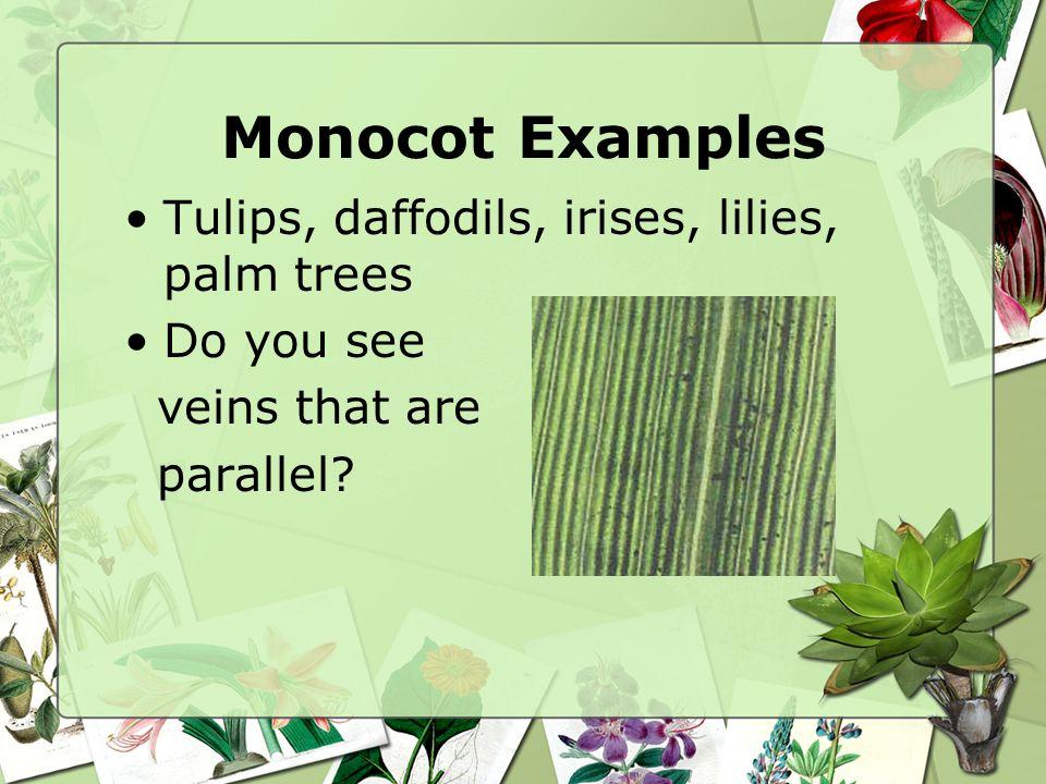 Angiosperms Monocot Versus Dicots Biology 112 Monocots Dicots