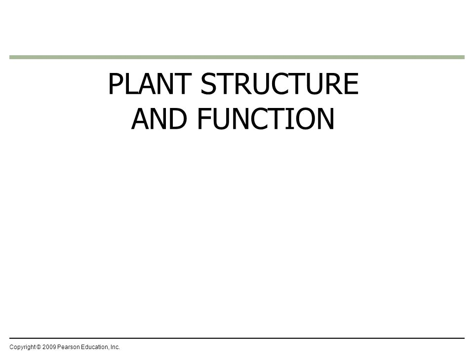 Copyright © 2009 Pearson Education, Inc. PLANT STRUCTURE AND FUNCTION