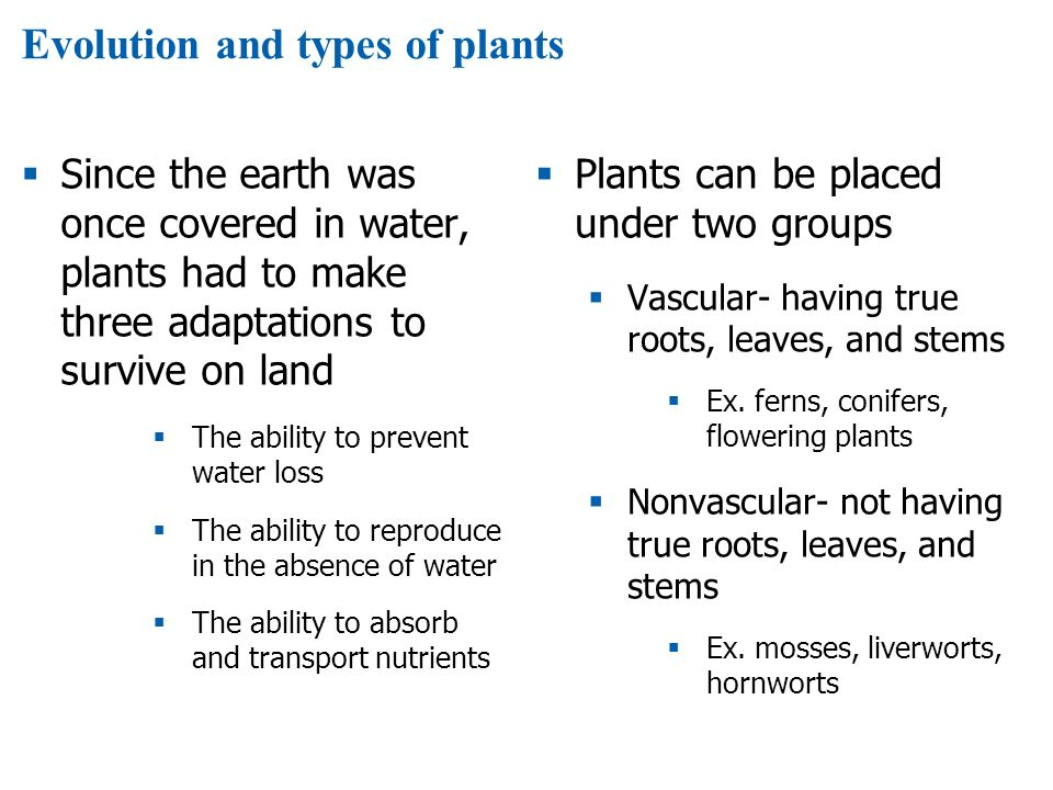 Evolution and types of plants  Since the earth was once covered in water, plants had to make three adaptations to survive on land  The ability to prevent water loss  The ability to reproduce in the absence of water  The ability to absorb and transport nutrients  Plants can be placed under two groups  Vascular- having true roots, leaves, and stems  Ex.
