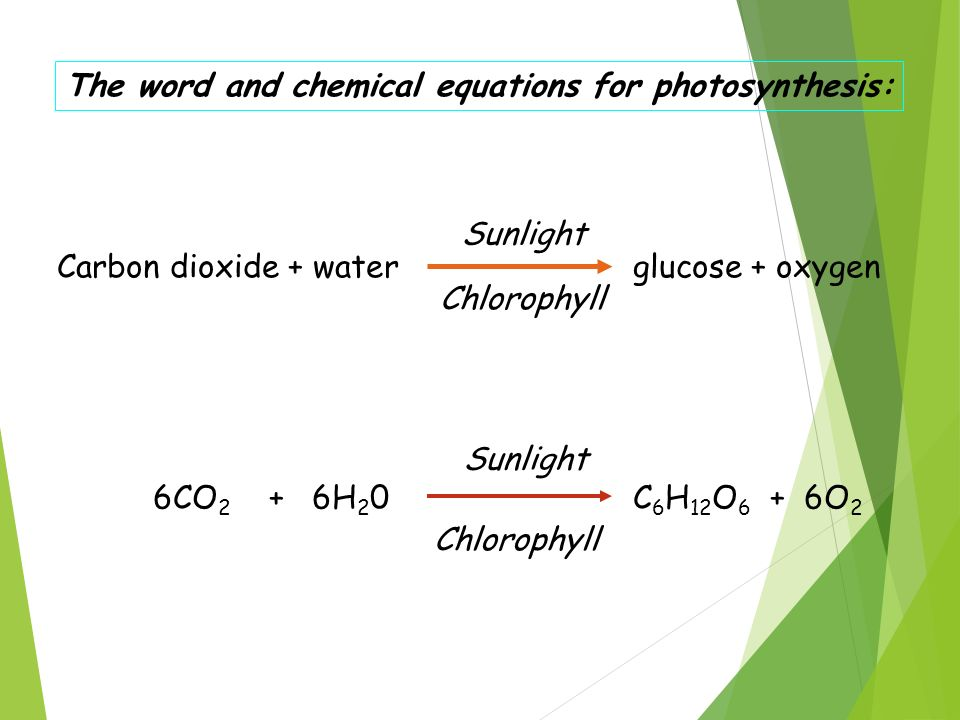 the impact of external factors: water and the carbon dioxide on the rate of photosynthesis essay By understanding the factors that affect the rate of photosynthesis they can do work to try and carbon dioxide these three factors are called water and.