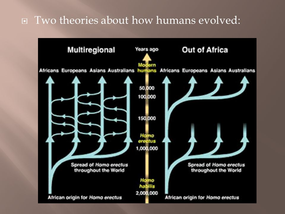 from human prehistory to the early