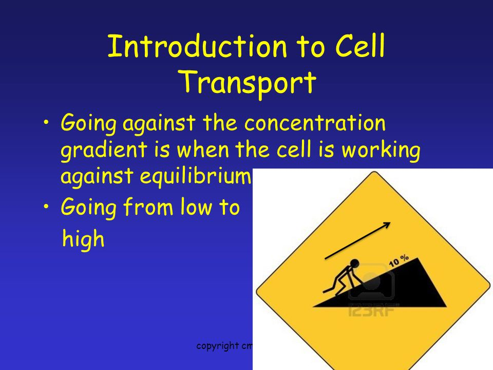 Introduction to Cell Transport Going against the concentration gradient is when the cell is working against equilibrium.