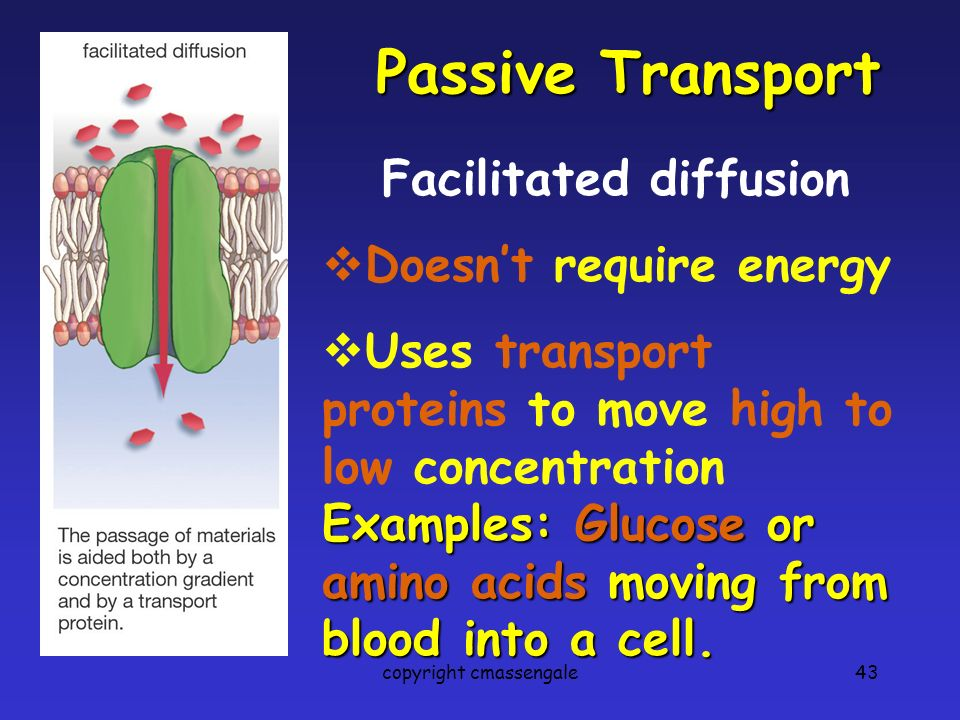 43 Passive Transport Facilitated diffusion  Doesn't require energy  Uses transport proteins to move high to low concentration Examples: Glucose or amino acids moving from blood into a cell.