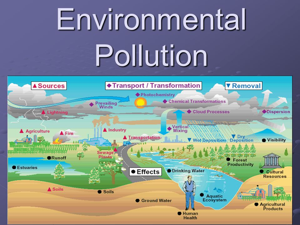classify the types of environmental pollution essay