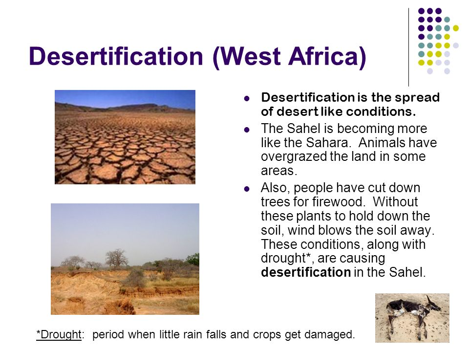 Desertification (West Africa) Desertification is the spread of desert like conditions.