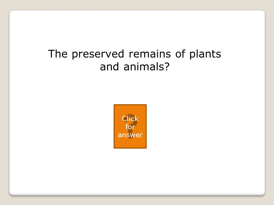 The preserved remains of plants and animals Click for answer