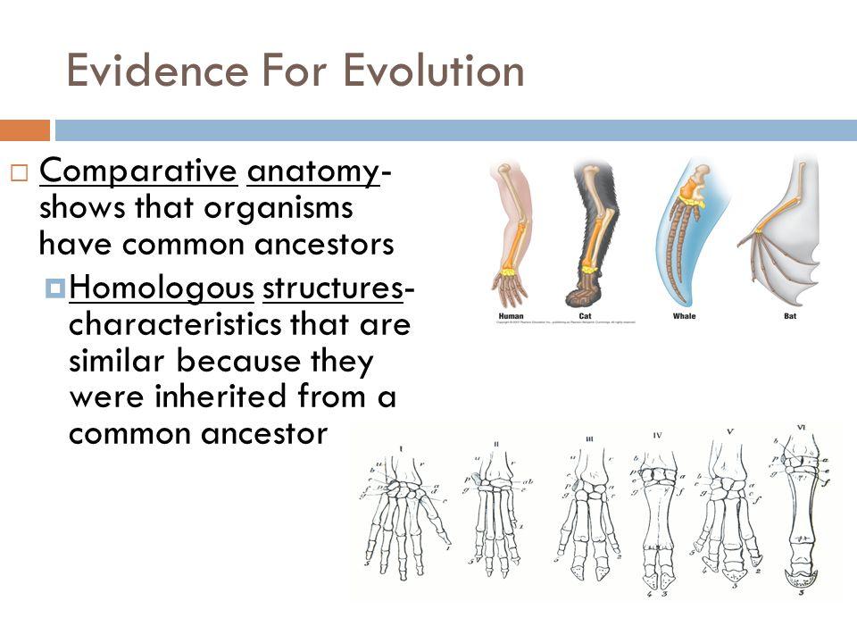 Evidence of evolution anatomy