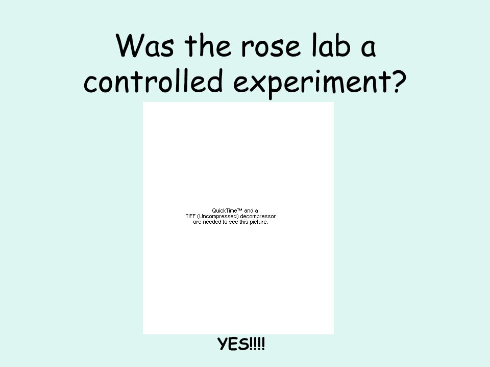 Was the rose lab a controlled experiment YES!!!!