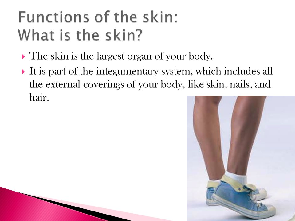  The skin is the largest organ of your body.