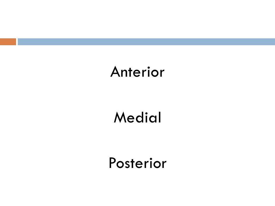 Anterior Medial Posterior