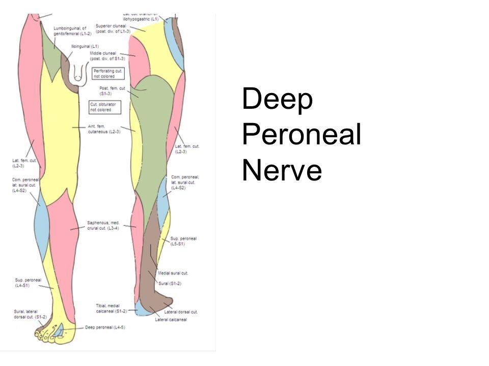 Deep Peroneal Nerve