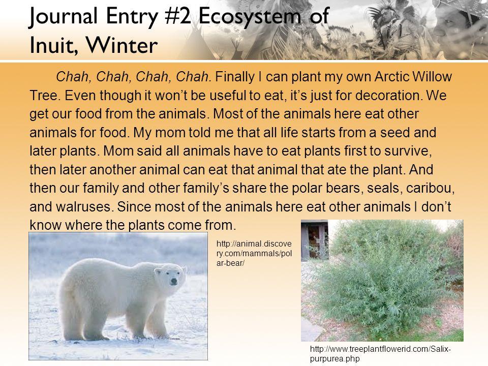 Inuit people essay help.?