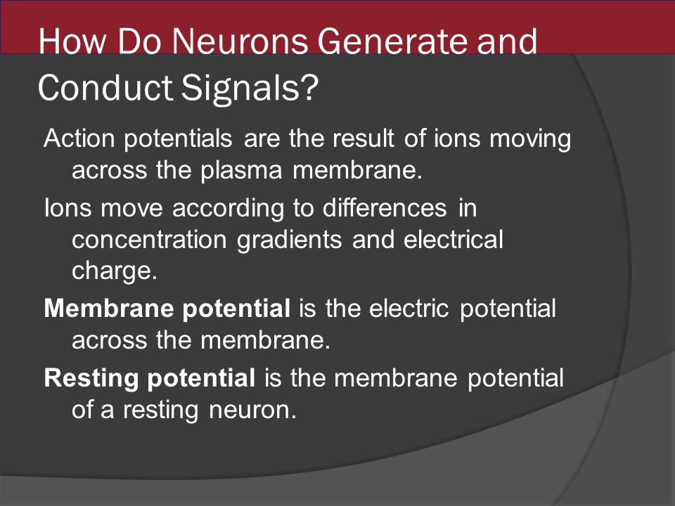 How Do Neurons Generate and Conduct Signals.