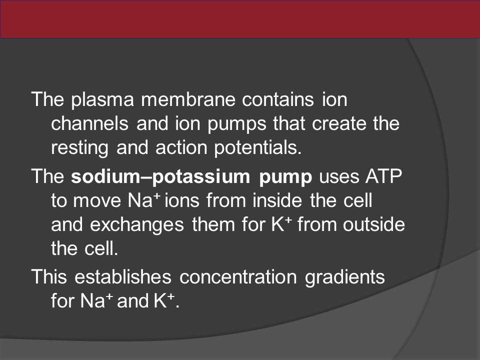 The plasma membrane contains ion channels and ion pumps that create the resting and action potentials.