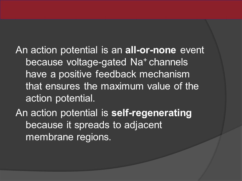 An action potential is an all-or-none event because voltage-gated Na + channels have a positive feedback mechanism that ensures the maximum value of the action potential.