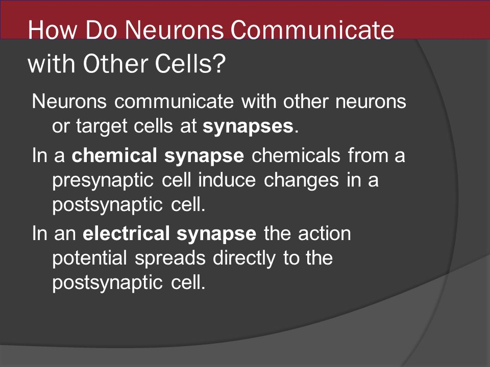 How Do Neurons Communicate with Other Cells.