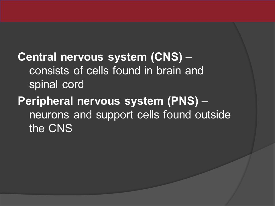 Central nervous system (CNS) – consists of cells found in brain and spinal cord Peripheral nervous system (PNS) – neurons and support cells found outside the CNS